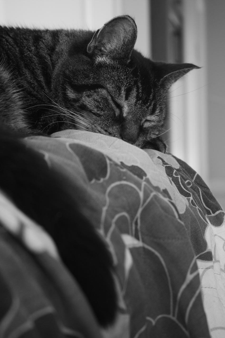 Black and white photo of a black and grey tabby cat sleeping over a sofa's backrest